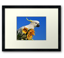 Sulphur Crested Cockatoo and Sunflowers Framed Print