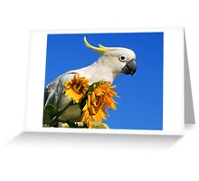 Sulphur Crested Cockatoo and Sunflowers Greeting Card