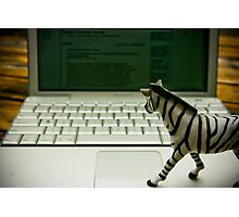 Mr. Zebra Check His Email Photographic Print