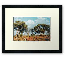 Outback trees Framed Print