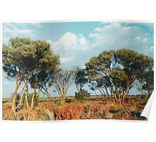Outback trees Poster