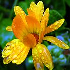 Yellow Rainflower Four by Rick Lawler