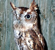 One Eyed owl by Sade