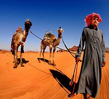 A Bedouin with his two camels.  by PhotoStock-Isra