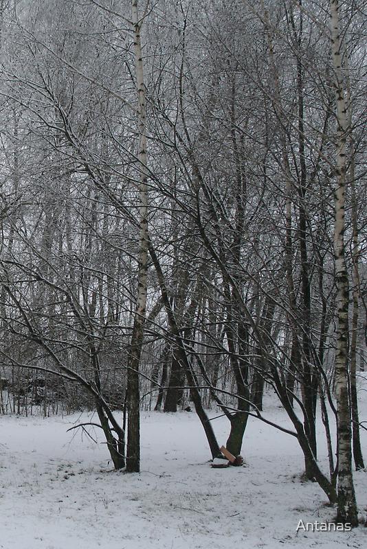 Winter tree by Antanas