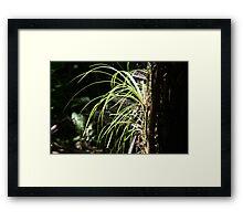 Forest Life Framed Print