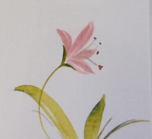 Lily by Donna Mearns