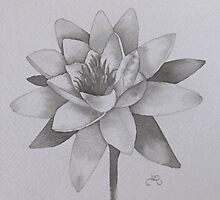Waterlily by Donna Mearns