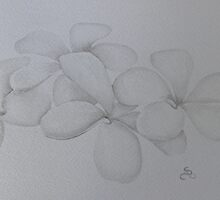 Watercolour frangipani by Donna Mearns