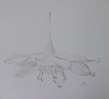Hanging flower by Donna Mearns