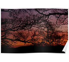 Sunset Branches Poster