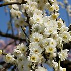 Plum Flowers by ablyth