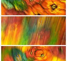 Blurred Silk Pattern Tryptych by Craig Watson