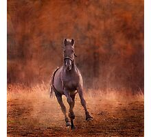 Black stallion Photographic Print