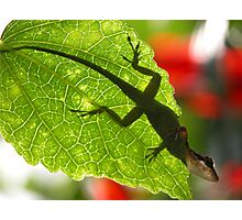 Shadow Lizard Photographic Print