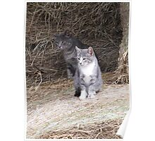Gray Cat and KIttens on Farm Hay Photograph Poster