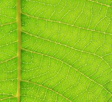 Go Green, Save the Earth - Mother Nature' Veins by LivingWild