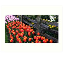 Tulip Fence One Art Print