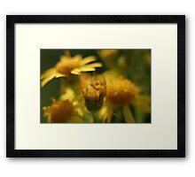 Summer Yellow Framed Print