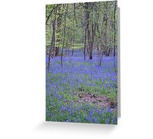 Beautiful bluebells number 2 Greeting Card