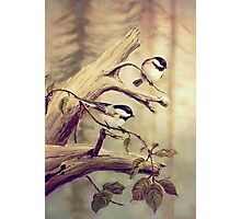 CHICKADEES on a BRANCH Photographic Print