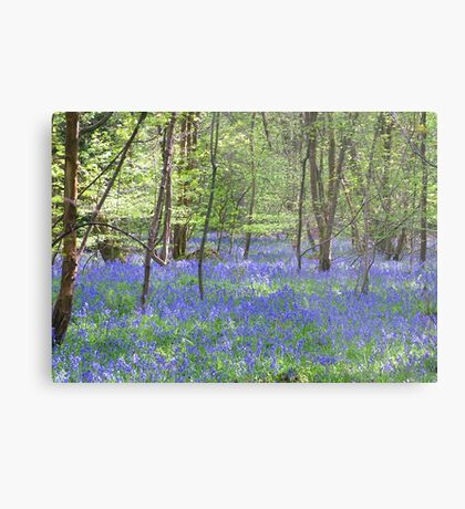 Beautiful bluebells number 3 Metal Print