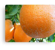 Plump Oranges Canvas Print