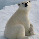 Polar Cub by Steve Bulford