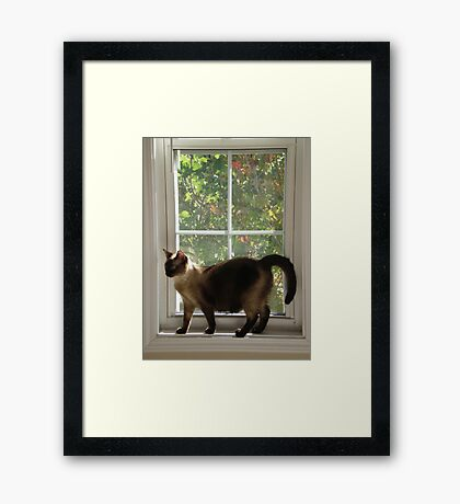 Window Siamese Framed Print