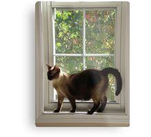 Window Siamese Metal Print