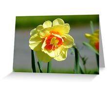 Tie A Yellow Ribbon Round The Old Oak Tree! - Daffodil - NZ Greeting Card