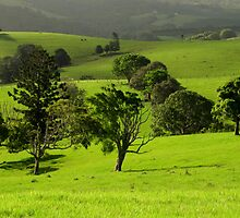 Green by Lachlan Kent