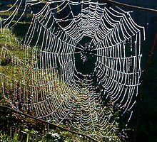 """""""Charolette's Web"""" by Naenod"""