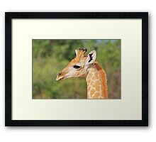 Giraffe Baby - Profile of new Life Framed Print