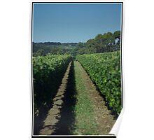 The Vineyard Poster
