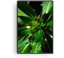 macro green plant Canvas Print