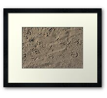 Quail tracks Framed Print