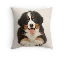 Boston the Bernese Mountain Dog Throw Pillow