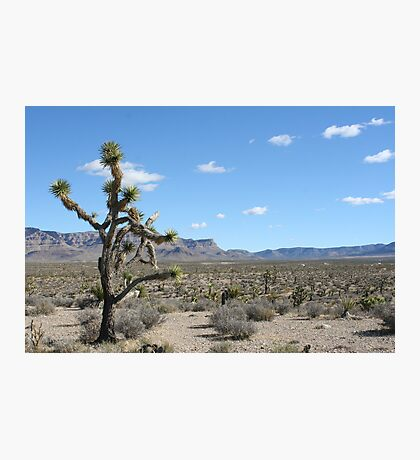 Grand Wash Cliffs, AZ Photographic Print