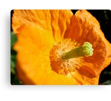 Close-up Flower Canvas Print
