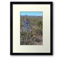 Nevada larkspur Framed Print
