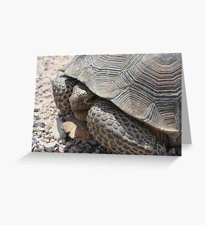 Nevada Tortoise Greeting Card