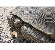 Nevada Tortoise Photographic Print