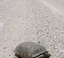 Tortoise on the road by Chris Clarke