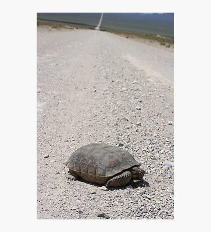 Tortoise on the road Photographic Print
