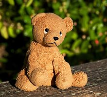 Ted Needs A friend by Susie Peek