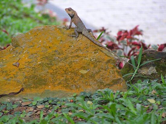 Lounging Lizard by MuscularTeeth