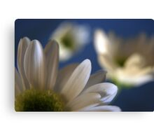 White... Canvas Print