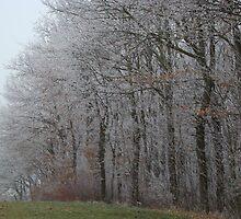 Winter freeze by Hermann Hanekom