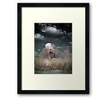 The Willow Tree Framed Print